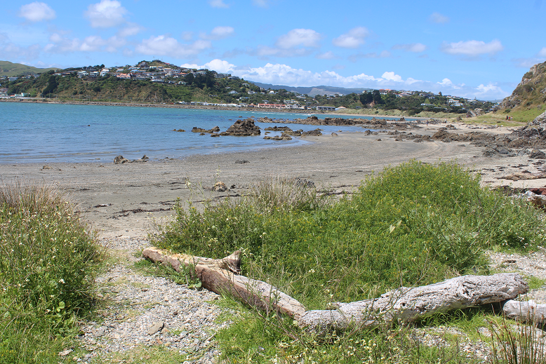 Onehunga Bay, Near Wellington