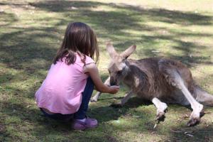 Feeding a kangaroo, tasmania